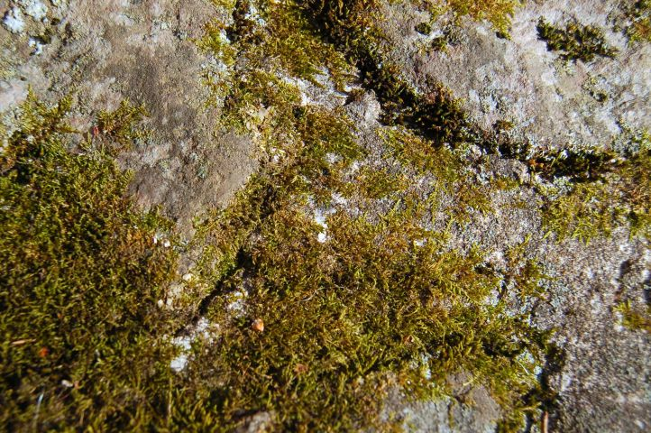 Mossy rocks, Cascades Hike, Giles Co, VA by Andrea Badgley on Butterfly Mind
