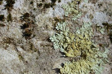 Lichen, Cascades Hike, Giles Co, VA by Andrea Badgley on Butterfly Mind