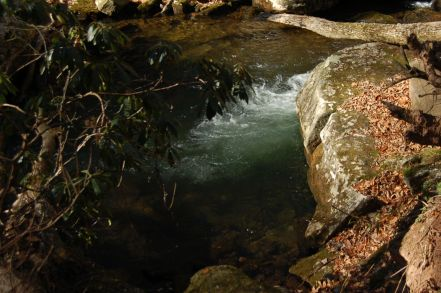 Rhododendron and Little Stony Creek, Cascades Hike, Giles Co, VA by Andrea Badgley on Butterfly Mind