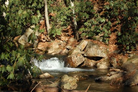 Rhododendron by Little Stony Creek, Cascades Hike, Giles Co, VA by Andrea Badgley on Butterfly Mind