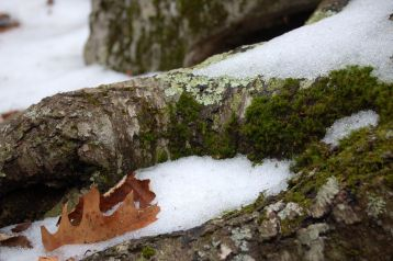 Snow and moss on the Cascades hike by Andrea Badgley at Butterfly Mind