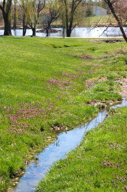 purplecloverstream_0003