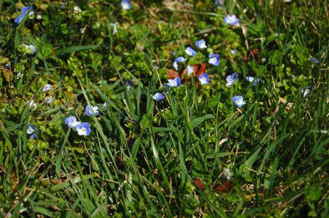 purpletinyflowers_0012