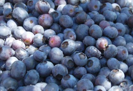 U-pick blueberries from 3 Birds Berry Farm on andreabadgley.com
