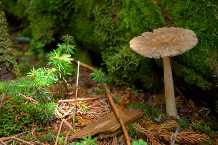 Mushroom, moss, and fir at summit of Mt. Rogers, VA on andreabadgley.com