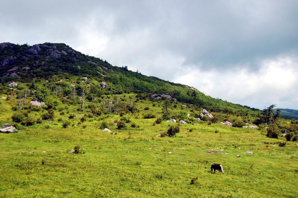 Wild Pony in sunlight along Appalachian Trail on Wilburn Ridge, hike to Mt. Rogers, VA on andreabadgley.com