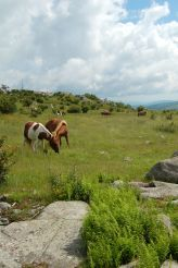 Wild ponies from Wilburn Ridge on Appalachian Trail, hike to Mt. Rogers, VA on andreabadgley.com