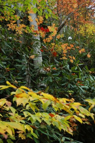 Green, red, yellow leaves Babcock state park, WV, October 2013 on andreabadgley.com
