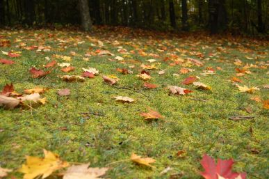 Autumn leaves on grassy hill, Babcock State Park, WV October 2013 on andreabadgley.com