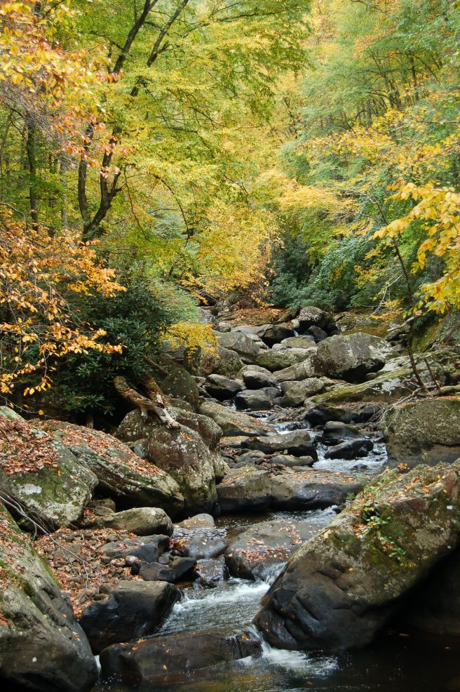 Stream with rocks and autumn leaves, Babcock State Park, WV October 2013 on andreabadgley.com