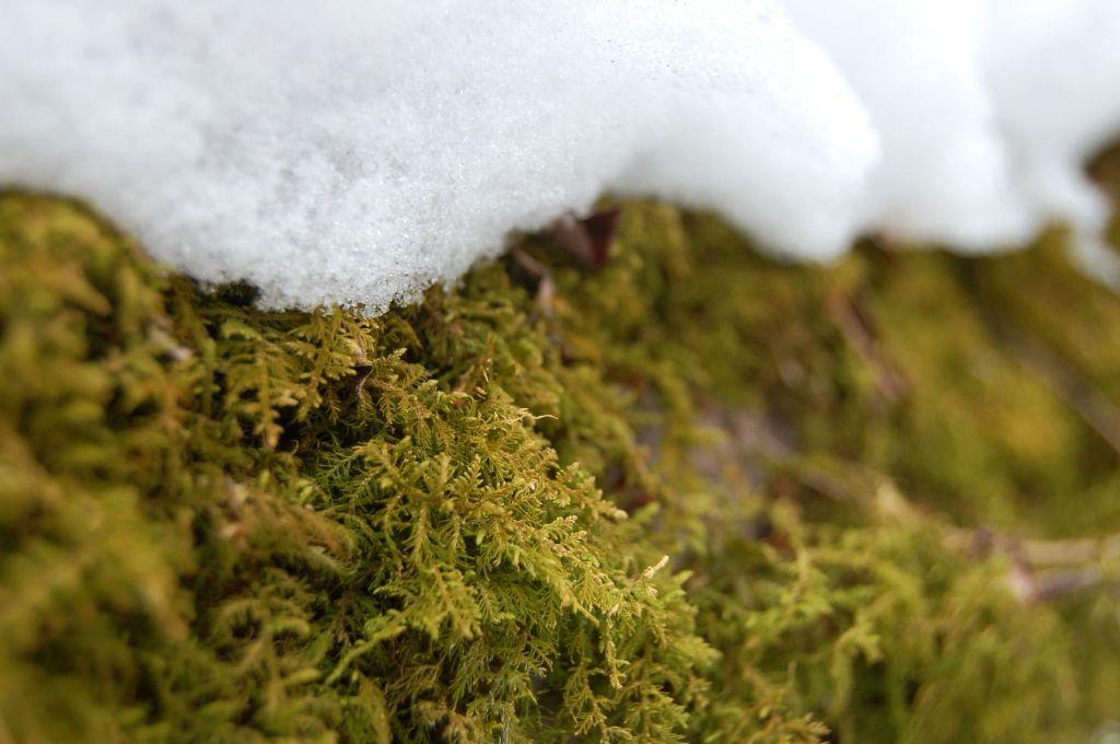 Moss and snow on Cascades hike near Blacksburg, Virginia on andreabadgley.com