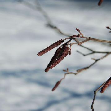 Unknown plant, Pandapas Pond, Blacksburg, VA February 2014 by Andrea Badgley on Butterfly Mind