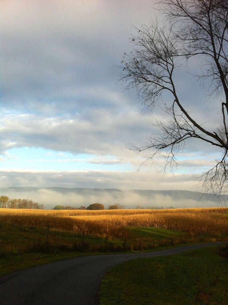 Morning walk by Andrea Badgley on andreabadgley.com