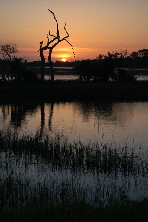 Sunset at Spanish Hammock, near Tybee Island Georgia by Andrea Badgley on Butterfly Mind