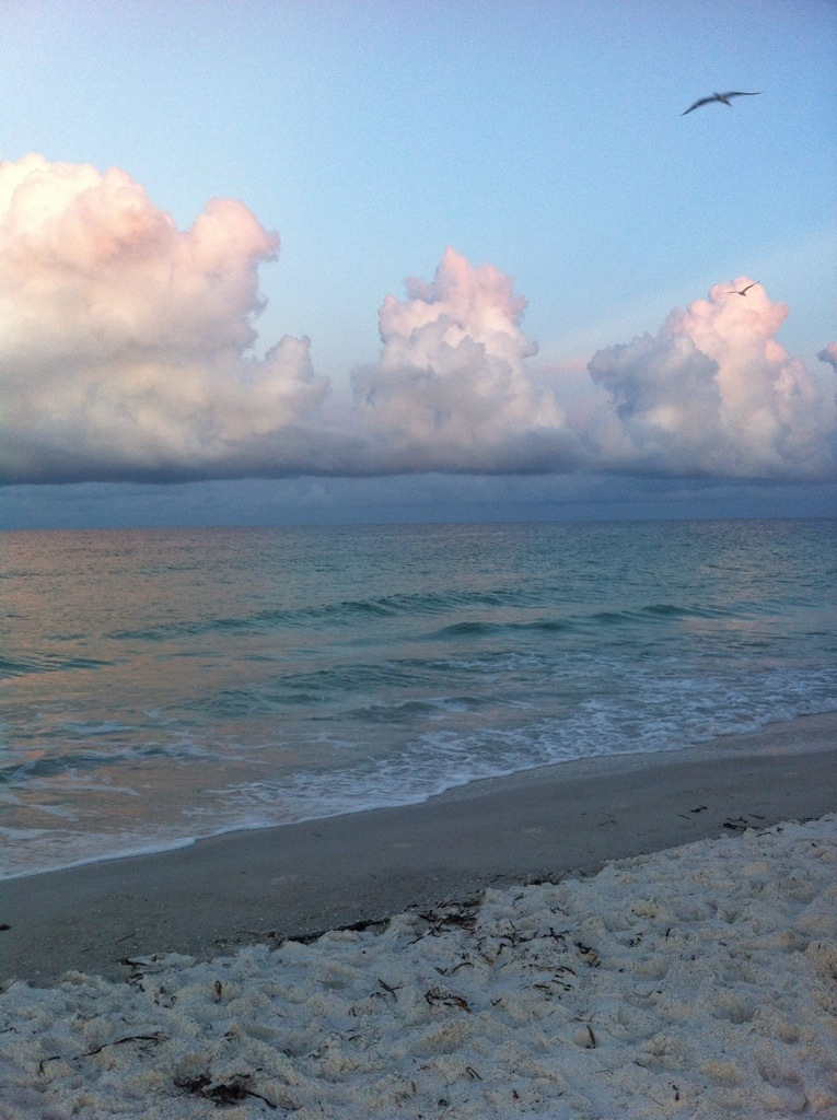 Cotton puff clouds over Gulf of Mexico, Anna Maria Island, FL. by Andrea Badgley on Butterfly Mind
