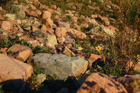 Rocks and flowers, Canyons Grand Summit Resort, UT by Andrea Badgley on Butterfly Mind