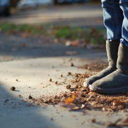 Boots and acorns: November street scene