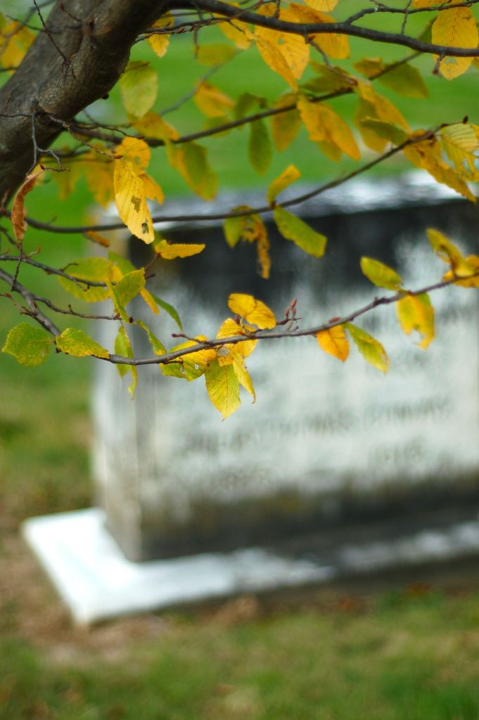 Autumn leaves, Westview Cemetery, Blacksburg, VA by Andrea Badgley on Butterfly Mind