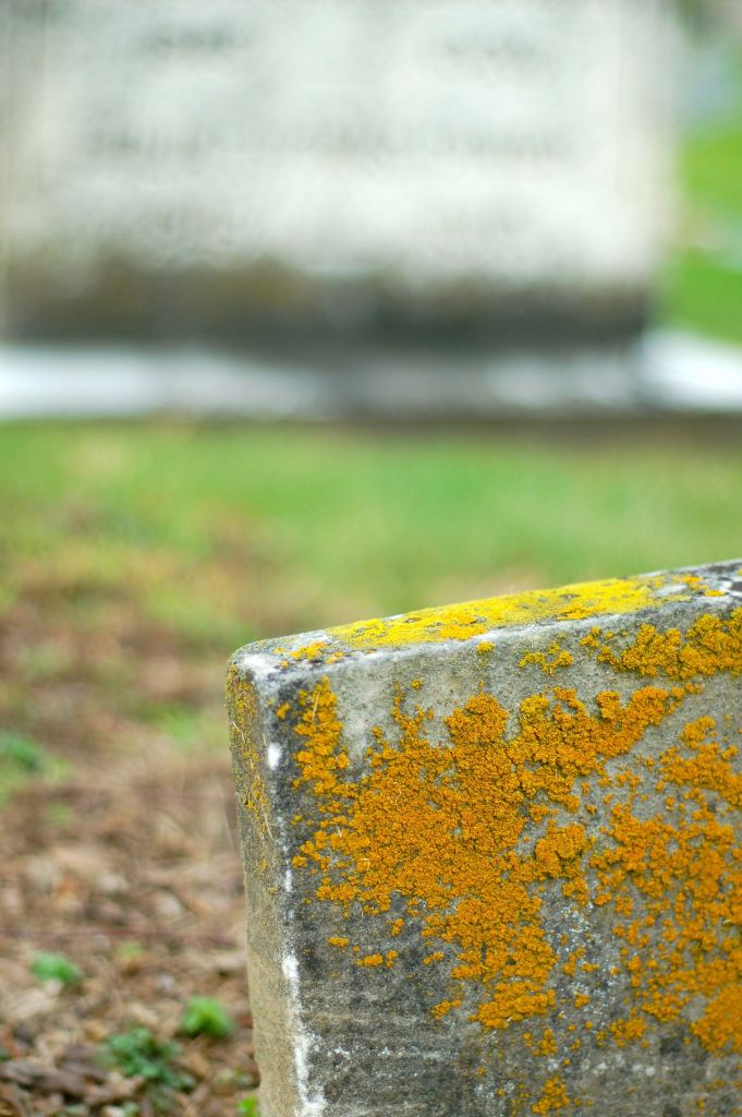 lichens on tombstone