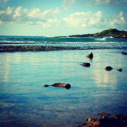 I surfed in Hawaii