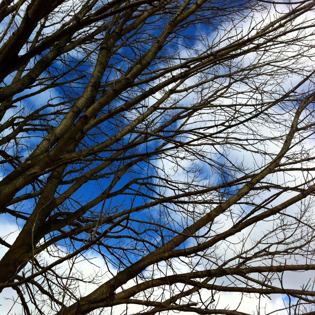 January sky with tree limbs by Andrea Badgley on Butterfly Mind
