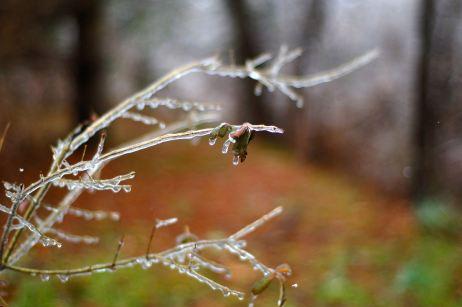 sparkly twig