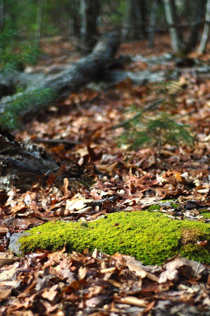 Mossy stone in the woods