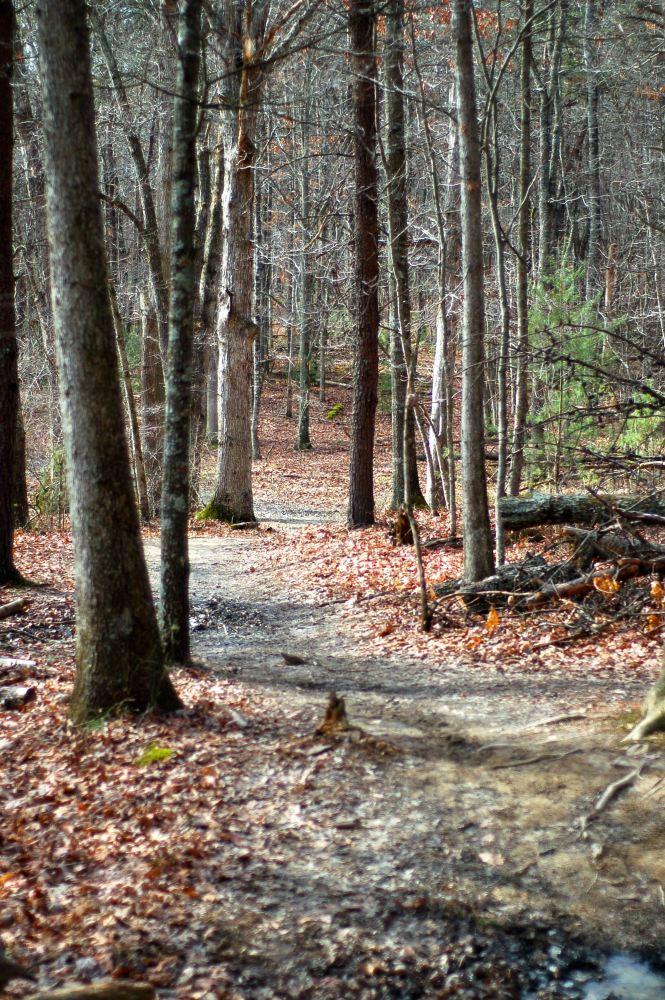 Running away to the woods (2/6)