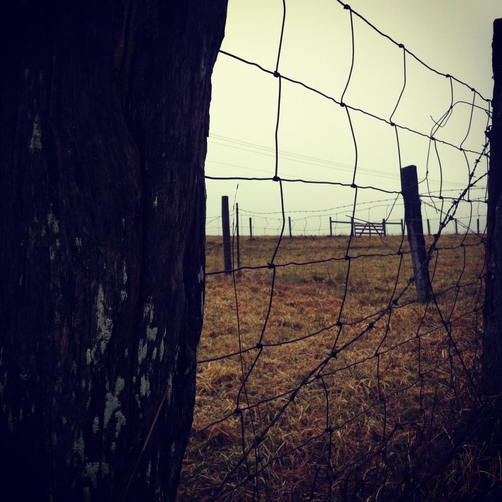 Rainy day fence by Andrea Badgley on Butterfly Mind