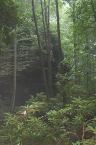 Humid Forest, Breaks Interstate Park, Virginia