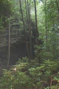 Humid Forest, Breaks Interstate Park, Virginia