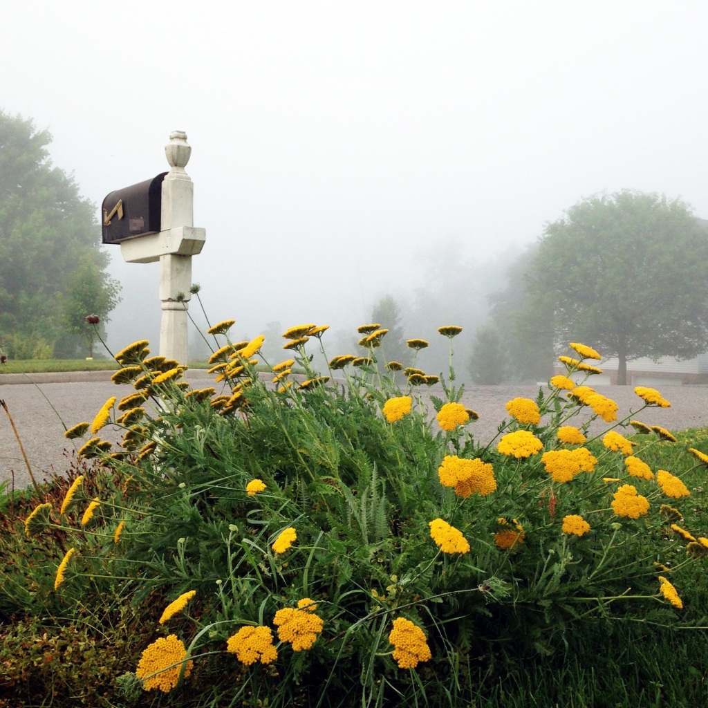 Mailbox and yellow flowers in fog by Andrea Badgley on Butterfly Mind