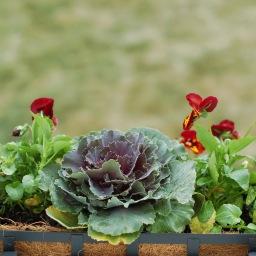 September gardening