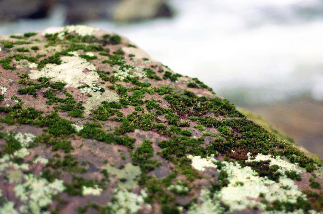 moss lichen rock