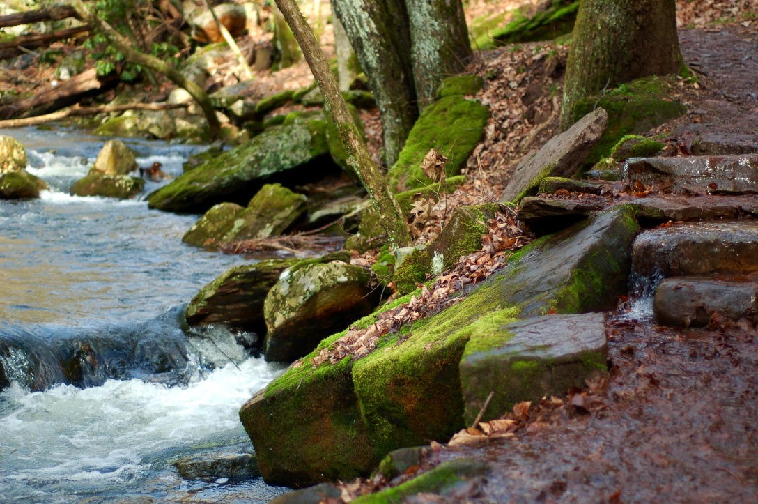 mossy stream path