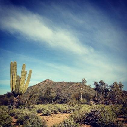 Saguaro cactus and mountaian, Phoenix Arizona