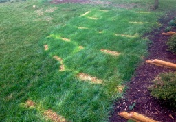 Killing grass: we're pivoting