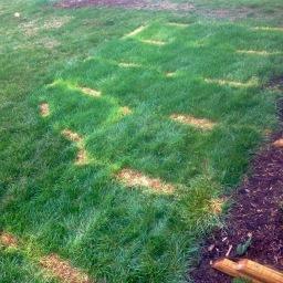 Killing grass: we're pivoting