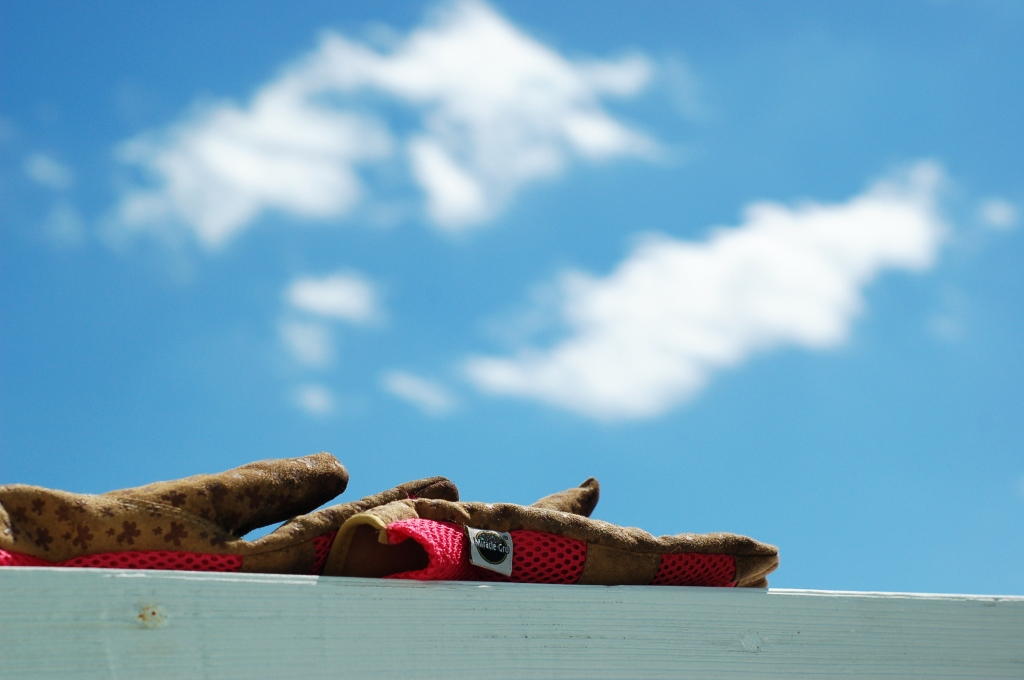 Garden gloves and blue sky