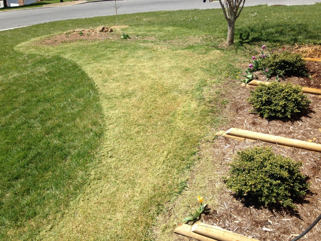 Building a flower bed killing grass round 2 butterfly for Grasses for flower beds