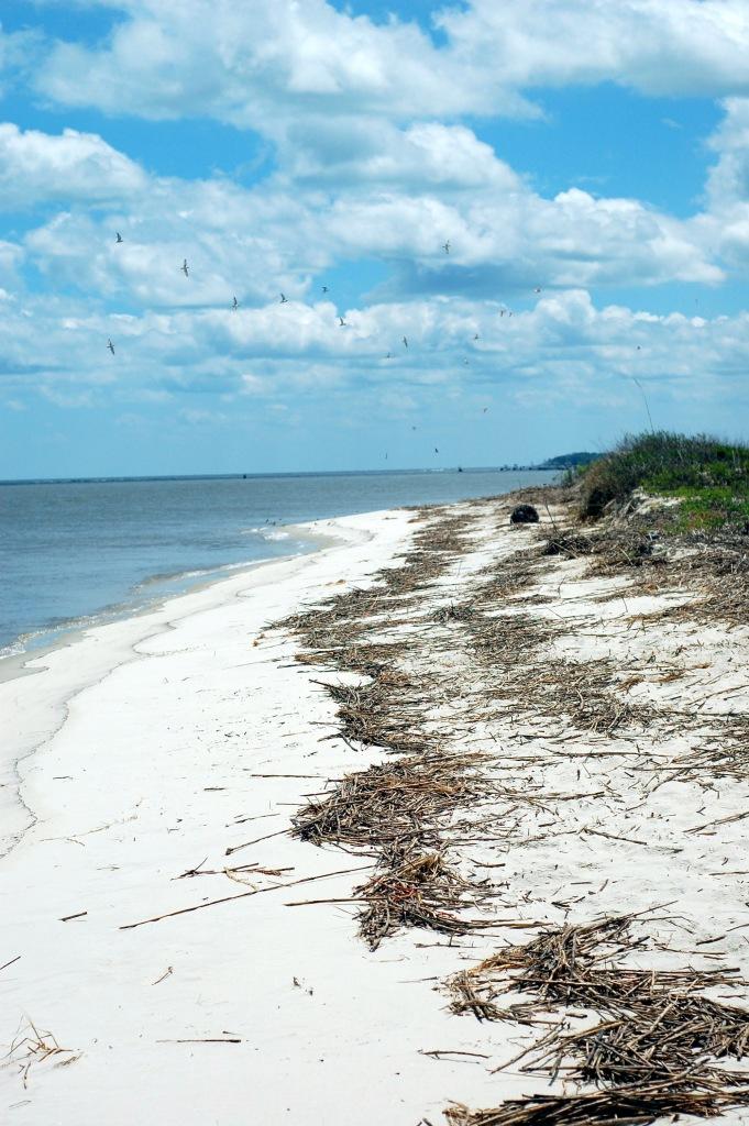 Barrier island beach, Georgia