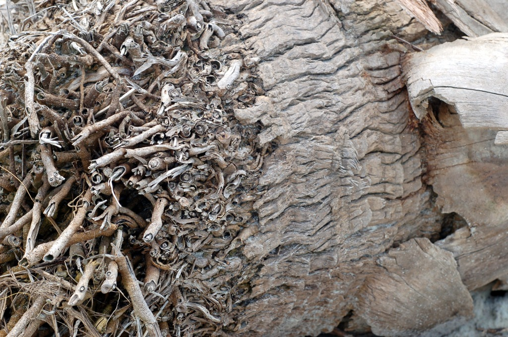 Driftwood palm tree