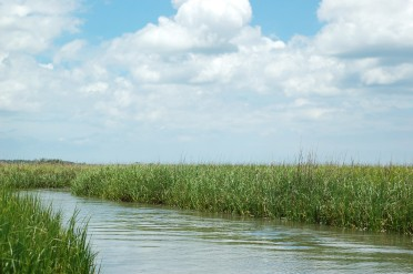 Marshes from the boat