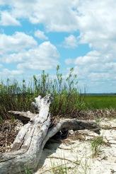 dried out tree trunk, sky, beach, marsh, coastal Georgia