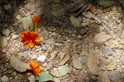 Flowers on the ground at Chichen Itza