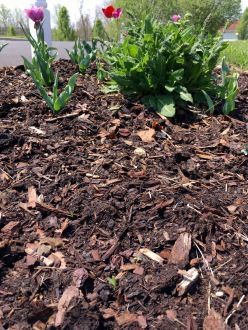 Seedlings by mailbox