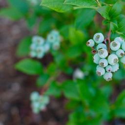 Garden infusion