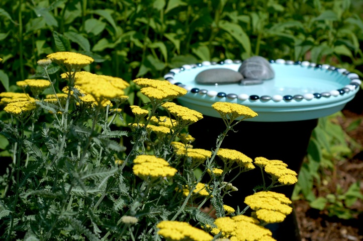 Yarrow and bird bath
