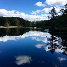 Meditation by the pond