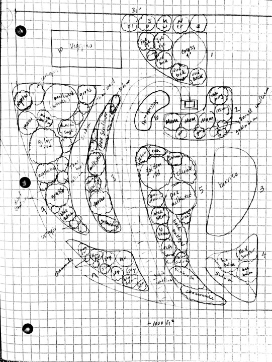 back hill garden plan